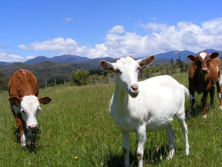 302 Mackay Pass Road, Collingwood, Tasman District