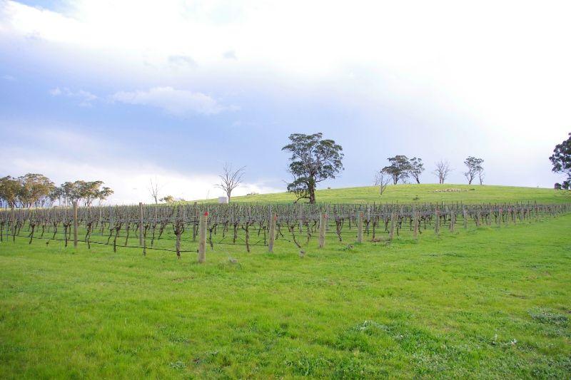 Hughes Creek Vineyard - Nagambie