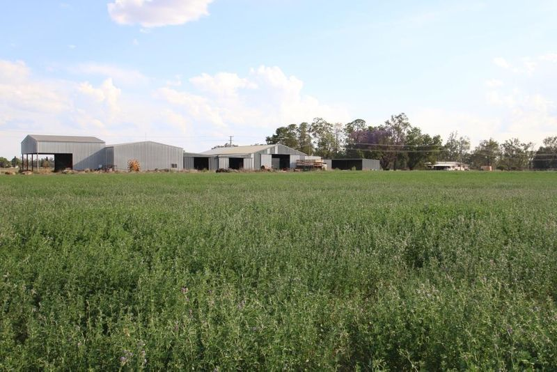 Receivers' Sale - Irrigated Lucerne Property - Mundubbera