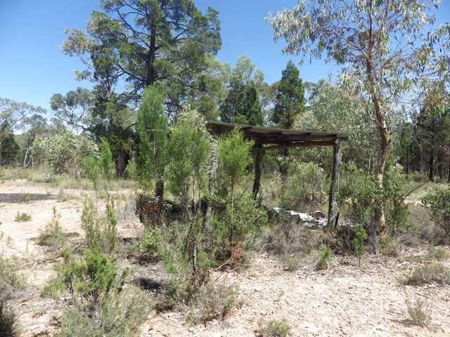 Native Bush Block - Cowra