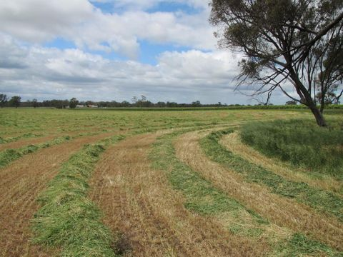 Mundulla, 220 acres The Mile Lane