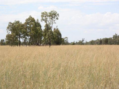 Millmerran, 0 Millmerran-Cecil Plains