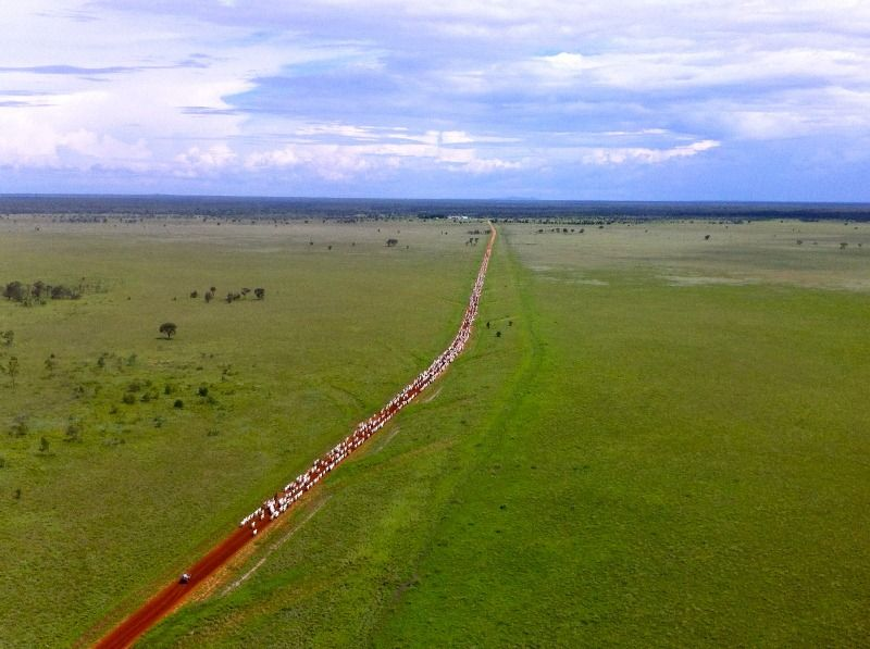 BUY or CO-INVEST - Natal Downs Aggregation running 30,000 plus cattle - Charters Towers