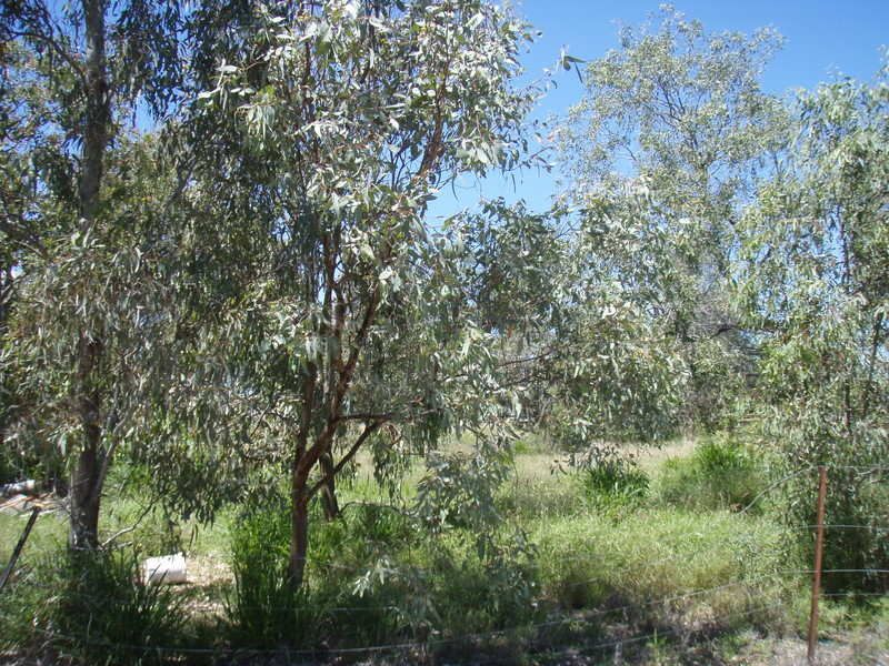 LAND CLOSE TO TOWN! - Charleville