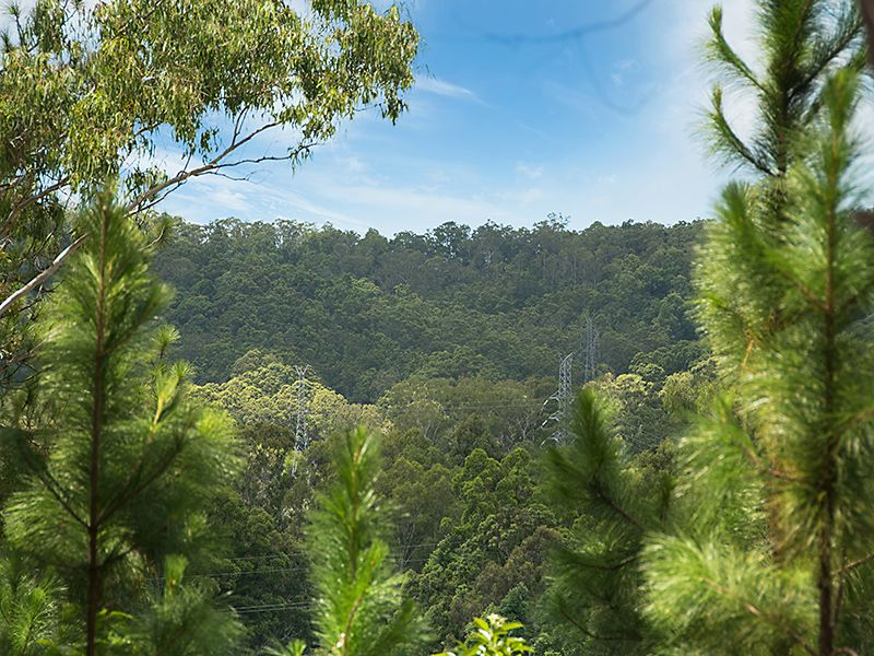 Affordable Acreage Close to Palmwoods - Palmwoods