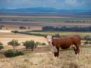 Will This Be The Best Value Country In The Quirindi District - Vendor Instructs Pre-Christmas Sale - Quirindi