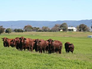 Decision Made - We are Selling Before Christmas - Bingara