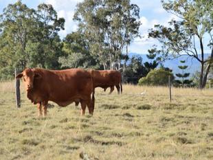 86 Acres Location / Lifestyle / Grazing !! - Wanora