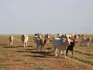 Family Restructure Demands Immediate Sale of High Quality Certified Cattle Property - Boulia